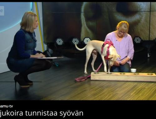 Ylen aamu TV: Hajukoira tunnistaa syövän